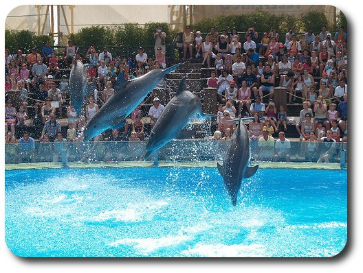 SeaWorld park, dolphins, penguins and other species